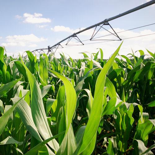 Системы полива для сельского хозяйства